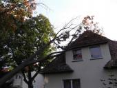 Kurioses - Entfernung eines Baumes